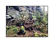 ---pralesní...