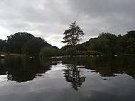 strom na jezere