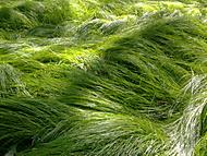 zelená je tráva