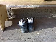 cice mice