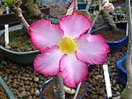 Květ v zahradnictví