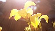 Letní květinka