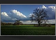 Památné stromy...
