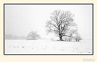 Památné stromy (3)