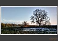 Památné stromy (2)