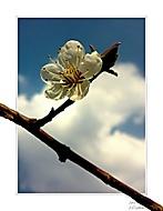 Přišlo jaro