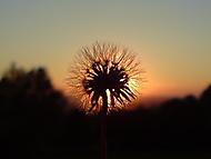 Západ slunce nad loukou