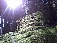 Ranní svítání v lese