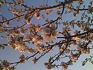jaro v rozpuku