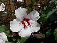 Kvetoucí nádhera