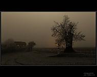 Smutný podvečer (2) (Fiho) – Asus Zenfone Max (ZC550KL)