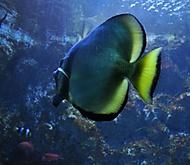 Akvarium Polsko