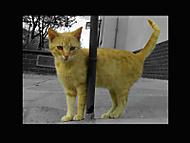 kočička mé kočičky
