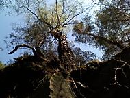Nevim. prostě strom:-) zespoda.