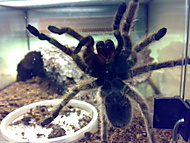 pavouček:D
