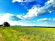 Golianovo príroda, Nitra lúky - 2012