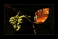 Podzimní míhání...