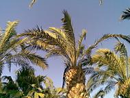 Španělsko 2008, Santa Susana