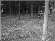 Malý les