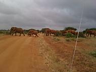 A opět sloni.