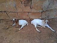 V masajské vesnici.