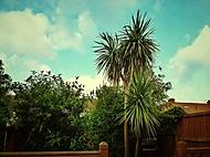 The English Garden,