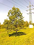 Stromek na louce