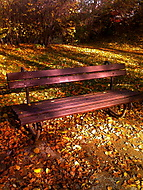 Park Bench in Prague