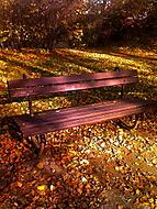 Park Bench in Prague