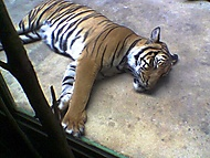 Zoo Praha Trója