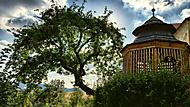 Strom u Hradu a také u Hrádku