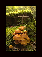 Zastup modlícich  pod monte Verde...