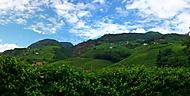 vinice (Bolzano Bozen)