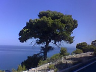 Strom na Lefkadě