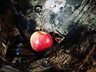 Jablko prosím....