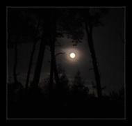 Když vlci vyjí na Měsíc...