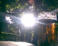 Pivní zář