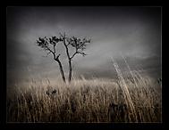 dark tree..
