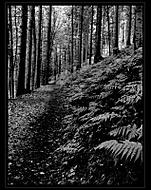 Cesta temným lesem