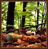 Život v lese