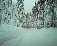 Zimo kde jsi ....?!?