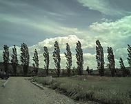 Stromy na konci Dobřichovic