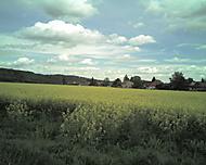 Pohled přes řepkové pole