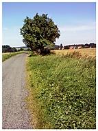 Cestička polem