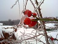 Šípky v ledu