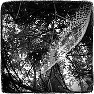 Pavučinka