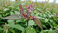 20150521_103103 (ivan1977) - Samsung Galaxy Note 4