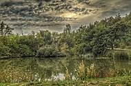 Rybník v Milíčovském lese