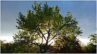 Strom a zapadající slunce