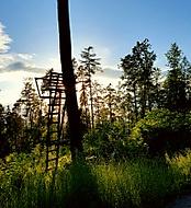 Podvečer v lese.